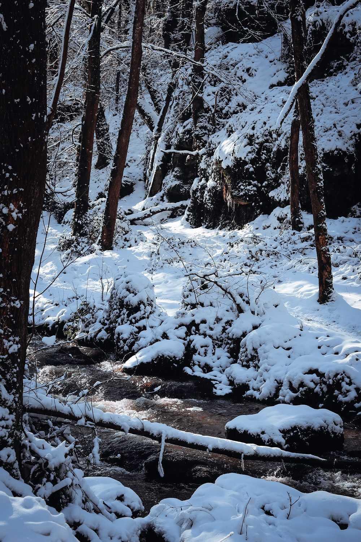 SAINT TRIMOEL sous la neige img-1920